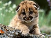 1274975153_the_cutest_baby_animals_04.jpg