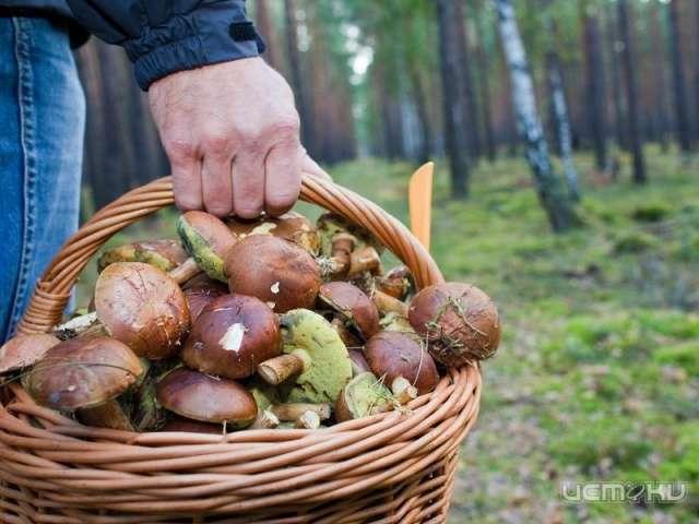 Завыходные ворловских лесах заблудились шесть человек