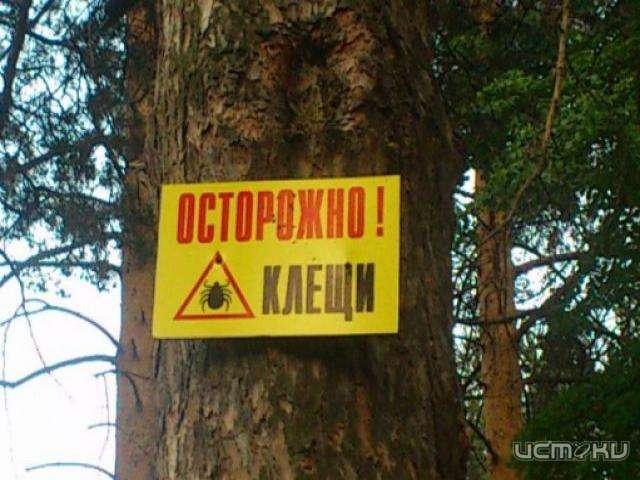 Трое граждан Южного Урала пострадали отукуса клещей